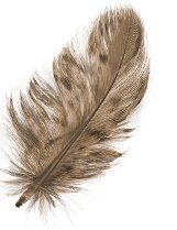 FEATHER_04